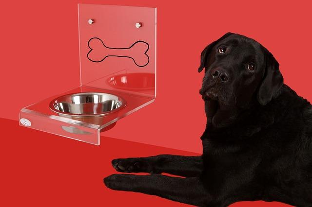 dog-bowl-2006373_640